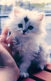 beautiful kittens beautiful kitten 3rd june 2016 we love cats and kittens