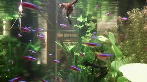wallpaper ikan bergerak untuk pc animasi wallpaper hidup youtube