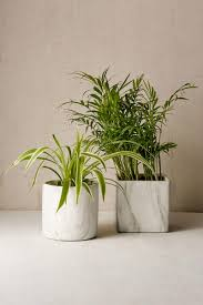 showcase your greenery with these stylish planters living in a