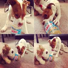 dog peanut butter friend gave dog an empty peanut butter jar last and he