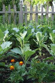 Decorative Vegetable Garden by 858 Best Allotments And Kitchen Gardens Images On Pinterest