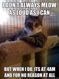 Funny Memes About Cats - i don t always meow as loud as i can cat meme cat planet cat planet