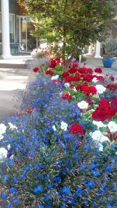 Patriotic Garden Decor with 14 Best Memorial Day Images On Pinterest Red Geraniums Flowers