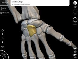 Anatomy And Physiology Skeletal System Test Skeleton 3d Anatomy Android Apps On Google Play