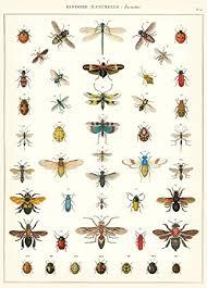 cavallini poster cavallini co history insects decorative