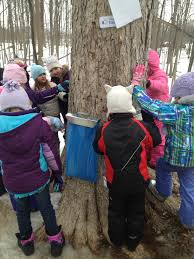maple sugaring events friends of wehr wehr nature center