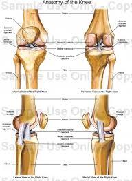 Knee Anatomy Pics Anatomy Of The Knee Medical Illustration Human Anatomy Drawing
