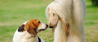 What Causes Dogs To Go Blind How To Wipe Out Whipworms In Dogs Care Com Community