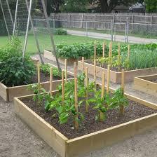 good vegetable garden ideas
