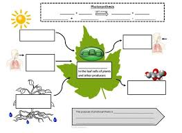 Photosynthesis And Cellular Respiration Worksheet Handwriting Guide Photosynthesis And Cellular Respiration