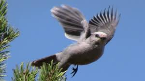 Backyard Birds Utah Uinta Expedition Soundtrack Utah Birds Squirrels Thunderstorm