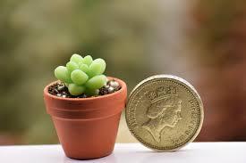 terracotta pots because every tiny plant deserves a tiny terracotta pot succulents