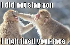 Funny Memes Animals - i high fived your face funny animal meme