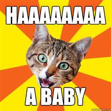 Meme Bebek - haaaaaaaa a baby cat meme cat planet cat planet