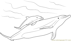 dolphin coloring pages pdf mother and baby dolphin coloring page free dolphin coloring pages