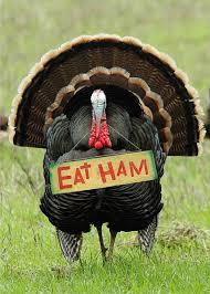 humorous eat ham thanksgiving card thanksgiving turkey cards