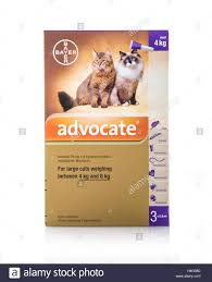 advocate flea and worm treatment for small cats and ferrets stock