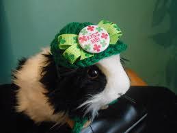 Bearded Dragon Halloween Costume Guinea Pig Hat St Patricks Hat Ferret Bearded