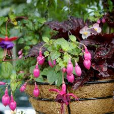 10 container garden tips for beginners