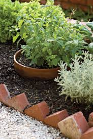 heat tolerant container gardens for sweltering summers southern