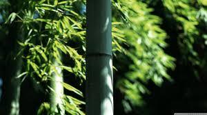 bambus fã r den balkon bamboo wall hd desktop wallpaper high definition fullscreen hd