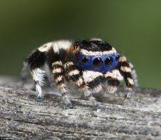 Sad Spider Meme - beauty am i the only one who thinks this is cute arachnid