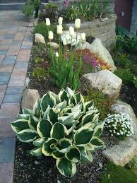 Light Up Rocks by H U0027patriot U0027 Rock Garden Hostas This Is Pretty Dee Pinterest