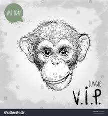 hand drawn sketch style illustration monkey stock vector 294689003