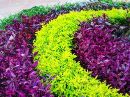 garden design by leafy plants arranged in semi circular or