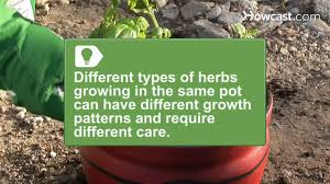 how to grow a one pot indoor herb garden youtube