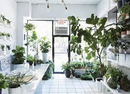 the store that s changing how city dwellers buy plants fiddle