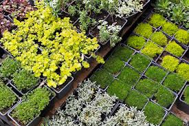 best places to buy gardening supplies in los angeles cbs los angeles