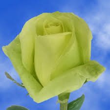 cheap flowers free delivery buy cheap flowers light green roses flowers free delivery global