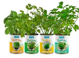 the healthiest indoor herb garden kit garden in a can back to