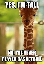 Meme Cheezburger - 19 giraffe memes to make you die laughing i can has cheezburger