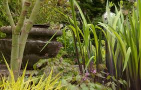 great garden combo 6 beautiful plants for a shady site
