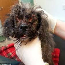Building A Box Blind Rspca Hunt Owner Who Abandoned Dog In Box Outside Vets With Fur So