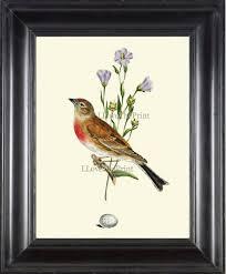 antique bird print art 10 beautiful songbird blue flowers egg