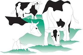 primary production of milk dairy processing handbook