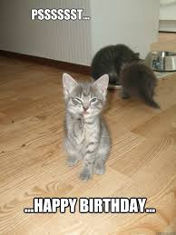 Cat Happy Birthday Meme - it s kitten s birthday the stephenking com message board