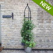 Support For Climbing Plants - buy climbing plant supports