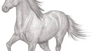 pencil sketches horses horse pencil sketch desipainters drawing