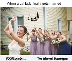 Funny Cat Lady Memes - when a cat lady finally gets married funny meme pmslweb
