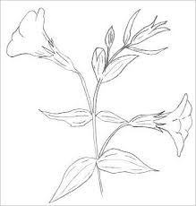 easy flowers to draw