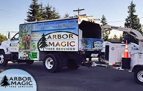commercial tree services arbor magic