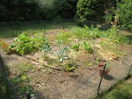 vegetable garden simplicitysoil