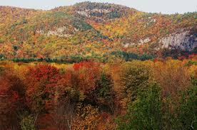 preparing flu season tracking fall foliage