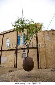suspended tree in jaffa tel stock photos suspended tree in jaffa