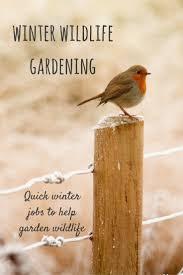 11 the 10 minute gardener winter wildlife gardening growing family