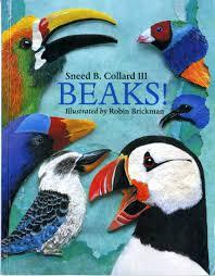 beaks cornell lab of ornithology birdsleuth k 12 cornell lab